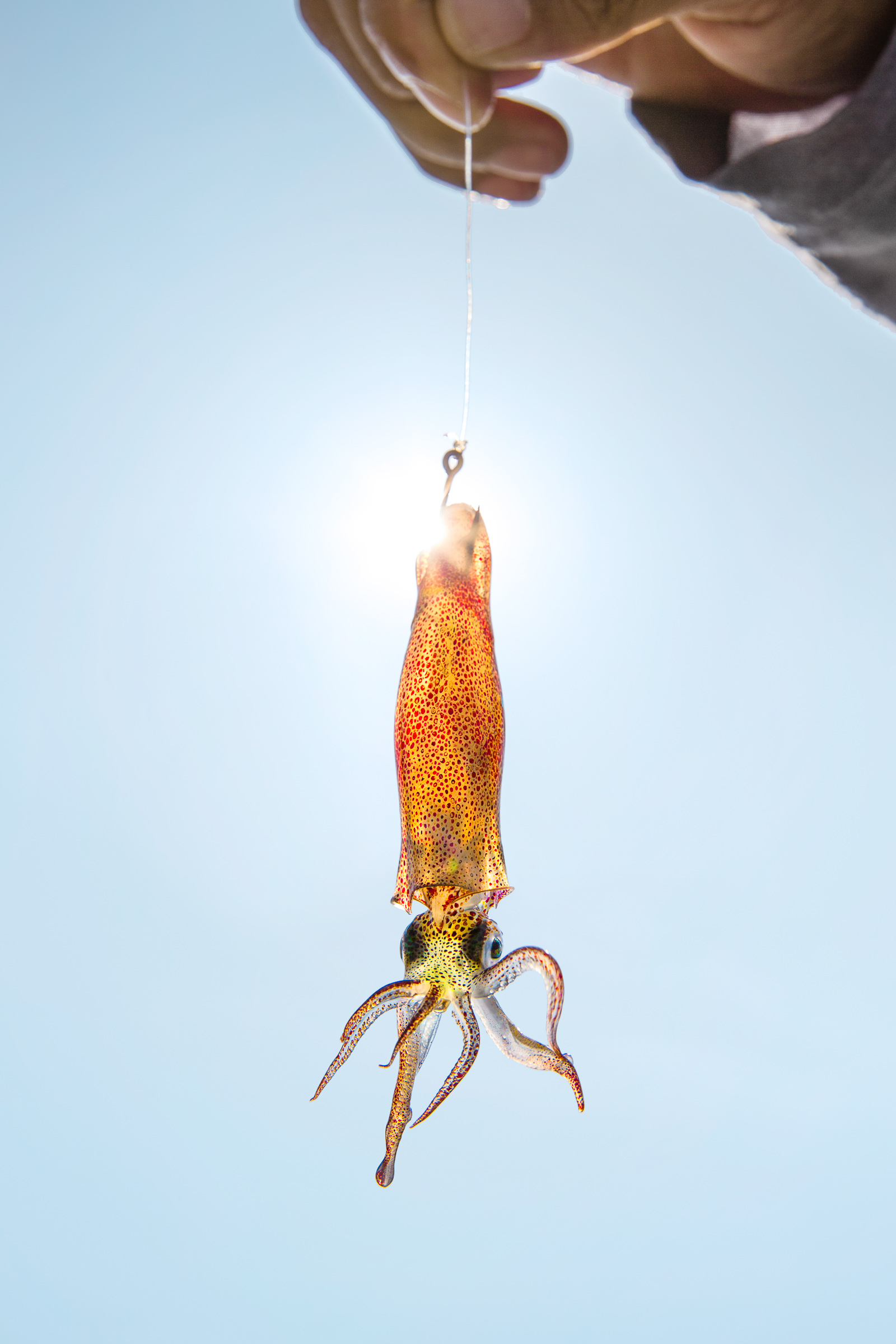 Squid bait dangles from a hook