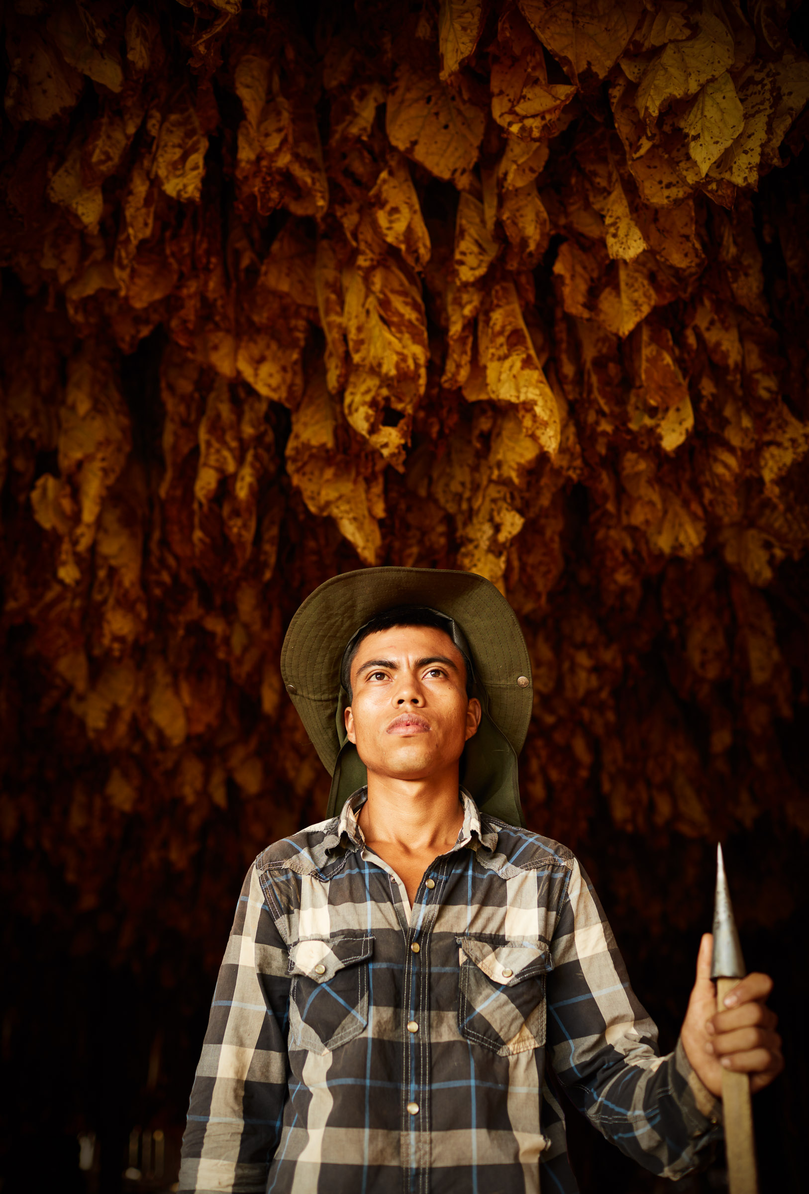 tobacco-harvest_00
